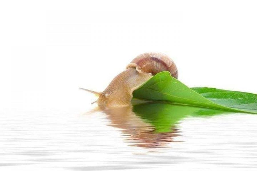 slimak-SnailsGarden